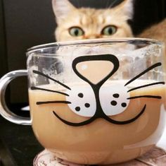 This cute kitten coffee mug is perfect for cat lovers! This adorable Kitty Mug is perfect for coffee, tea, milk and more. The mug is made of super-strong borosilicate glass. The cup is dishwasher, microwave and freezer safe. Face Mug, Cat Face, Crazy Cat Lady, Crazy Cats, Pretty Cats, Pretty Kitty, Cat Coffee Mug, Cute Mugs, Cat Lovers