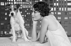 "Uggie in ""The Artist"" and also the dog that played Queenie in Water for Elephants!"