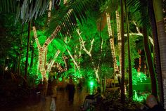 Parque Trianon — lit up in December. It's quite the post-dinner evening stroll.