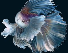 Photoshop painting on Behance Pretty Fish, Beautiful Fish, Animals Beautiful, Poisson Combatant, Betta Fish Tattoo, Tropical Fish Aquarium, Carpe Koi, Watercolor Fish, Fish Wallpaper