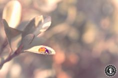 Ladybug after winter by Funky Porcupine, via 500px