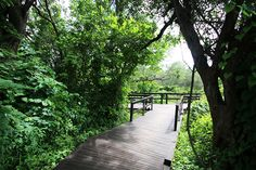 A Walk in the Woods Victoria Falls, Walk In The Woods, Bird Watching, Rafting, Canoe, Cruise, Southern, Africa, Country Roads