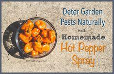 Homemade Garden Bug Spray