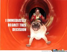Pug Memes. Best Collection of Funny Pug Pictures