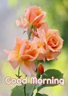 Good Morning Beautiful Images, Good Night I Love You, Good Morning Picture, Good Morning Good Night, Morning Pictures, Good Morning Wishes, Morning Pics, Good Afternoon Quotes, Good Morning Quotes