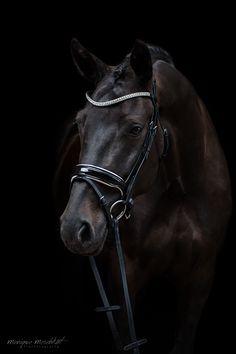 Back in Black - meschkat-fotografies Webseite!