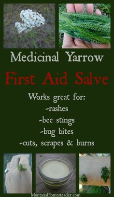 Herbal Medicine You can use homemade medicinal yarrow first aid salve for so many things. Here's a list of uses for quick reference: - You can use homemade medicinal yarrow first aid salve for so many things. Here's a list of uses for quick reference: Natural Home Remedies, Herbal Remedies, Health Remedies, Holistic Remedies, Cold Remedies, Bloating Remedies, Healing Herbs, Medicinal Plants, Be Natural