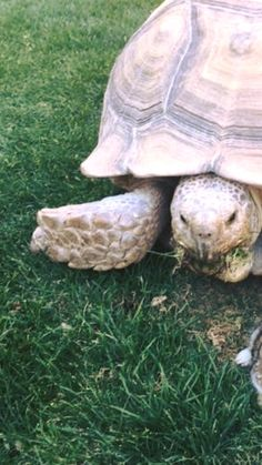 Tortoise adopts a tiny bunny, proving even so-called rivals can be pals via @AOL_Lifestyle Read more: https://www.aol.com/article/lifestyle/2017/02/27/tortoise-adopts-a-tiny-bunny-proving-even-so-called-rivals-can/21722859/