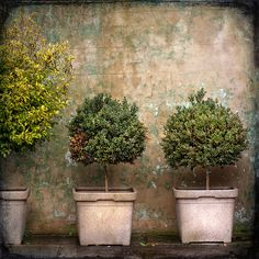 Love these terra cotta pots! They are a great addition to an urban garden