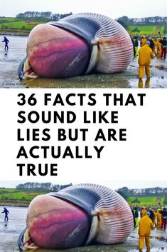 36 #Facts #That #Sound #Like #Lies #But #Are #Actually #True Unbelievable Facts, Amazing Facts, Interesting Facts, Weird Stories, True Stories, Shocking Facts, Wtf Funny, Funny Jokes, Weird World
