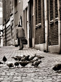 L'homme aux pigeons by lonysd