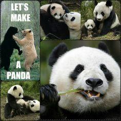 My daughter's favorite..  Panda's!!