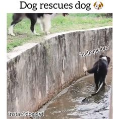 dog rescues dog,Funny, Funny Categories Fuunyy While not a pug, endorsed by pugs. Funny Dog Videos, Funny Animal Memes, Cute Funny Animals, Funny Animal Pictures, Cute Baby Animals, Funny Dogs, Animals And Pets, Cute Puppies, Cute Dogs