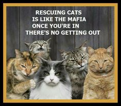 The Foundation For Homeless Cats, Phoenix, Arizona. Volunteers united to prevent homeless cats and kittens by managing the feral cat. Crazy Cat Lady, Crazy Cats, I Love Cats, Cool Cats, Funny Cats, Funny Animals, Cats Humor, Silly Cats, Feral Cats