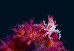 crab.jpg (520×357)