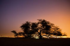 Sunset at the Tree of Life in Bahrain -The Tree of Life is a 400-year-old mesquite tree in Bahrain that is considered a natural wonder. This unique tree stands alone in the desert about two kilometers from the Jebel Dukhan, the highest point in Bahrain. The source of water for this tree remains a mystery because it stands in a place completely free of water.