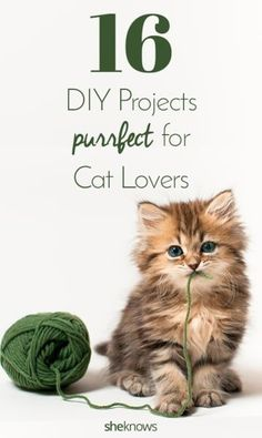 If you're a cat lover, you should try these DIY projects ASAP.