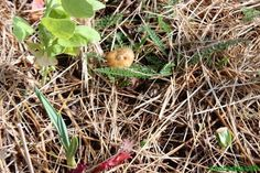 Un hongo en el invernadero - Ecocosas