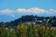 Visiting Darjeeling, one of the best hill stations in India was a great experience. the skyline here is dominated by the Kanchenjunga mountains and makes the town more scenic. India Travel Guide, Darjeeling, India Tour, Hill Station, Terrace Garden, Places Of Interest, Skyline, Tours, Marigold