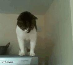 Anti-gravity cat on the fridge