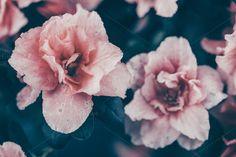 Pink flower by WorldImage on @creativemarket