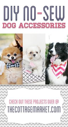 DIY No Sew Dog Accessories. Perfects for your adorable pooches. #dogs #accessories #bowties