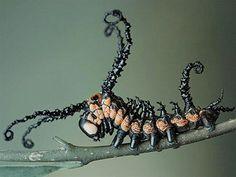 Véritables symboles des créations extraordinaires dont la nature est capable, les espèces d'insectes se comptent en millions. Pour vous, le DGSen a sélectionné 20 particulièrement effrayants.  La sauterelle géante &a...