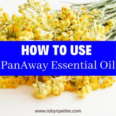 PanAway is like the icy hot of the essential oil world. This post will tell you a lot about how to use it, the benefits of it, and the cautions you need to take when you use it. PanAway is one of the oils in the Young Living Premium Starter kit. You may have gotten a kit without knowing how to use this. Now you will know. #essentialoils #panaway Panaway Essential Oil, Essential Oil Blends, Young Living, Starter Kit, Being Used, Benefit, Essentials, Hot