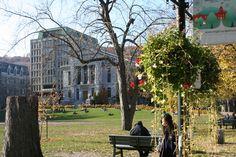 Université de Mc Gill, un coin de nature au milieu de la ville. Plus sur le blog !