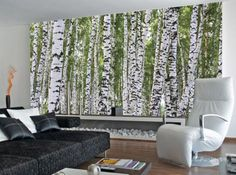 Forest of Birch Trees Wallpaper Mural