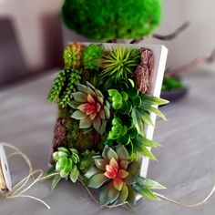 Obrazek z sukulentów roz. M Plants, Atelier, Plant, Planets