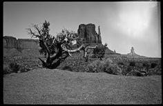Monument Valley - Zeiss SuperIkonta - Monument Valley, view from Merrick Point - Zeiss SuperIkonta (1937) - F22 - 1/125 #analog #photography #Black #and #white #desert #film #camera #Landscape #Monument #Valley #Navajo #Nation #Trees #Tribal #park #United #States #USA #Ut #Utah #Zeiss #Super #Ikonta