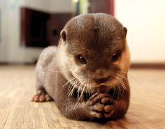 Nemo the Otter <3 Squeeeeeeeee