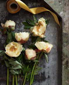 champagne fleurs...