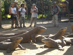 Rinca National Park