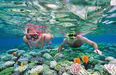 Swimming with the sharks : The Great Barrier Reef in Australia