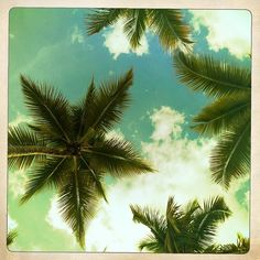 palm trees- I love this view from a hammock