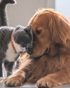 Full Details check the link below👇 👇 Kittens And Puppies, Cute Cats And Dogs, Cute Puppies, Cats And Kittens, Funny Animal Pictures, Cute Funny Animals, Cute Baby Animals, Animals And Pets, Funny Cats