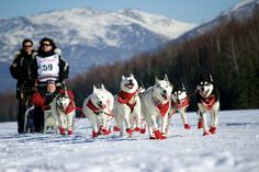 """Iditarod 2014 Ceremonial Start Photos - this is Karen Ramstead of North Wapiti Kennels. She is my FAV; running her """"pretty curly tails""""! Unfortunately, Karen will go on to break her hand during the race and she had to be scratched cause she could no longer hold on to the sled."""
