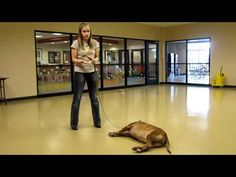 10 WEEKS TO CGC (lesson 9):  Positive Reinforcement.  Learn how to train your dog for the Canine Good Citizen test.