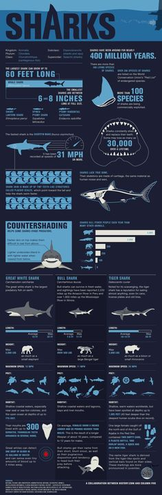 Sharks FAQ sheet - Comprehensive shark guide. Know your sharks! ♥ Want to scuba…