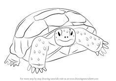 Learn How to Draw a Gopher Tortoise (Turtles and Tortoises) Step by Step : Drawing Tutorials
