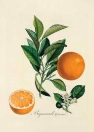 Citrus Peel Medicine  Discover the tradition of healing with citrus peel—the zesty, invigorating flavor can help support your health.