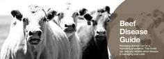 Cattle Disease Guide - This comprehensive disease guide provides information on diseases that can affect individual animals or an entire herd. Typical symptoms associated with the disease will help identify the problem, advice for treatment and measures to prevent disease is also available.