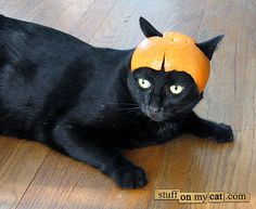 stuffonmycat.com: my cat would never stand for this lol