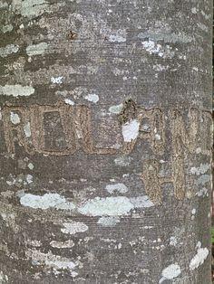 Baum geritzt# Geschnitzte Initialen# Rinde geritzt# Foto# Interessant was man an Bäumen so findet. City Photo, Design, Decor, Pictures, Kinetic Art, Contemporary Art, Wood Carvings, Sculptures