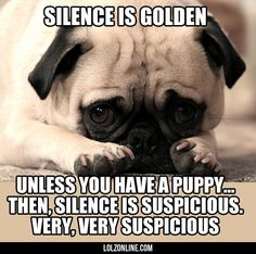 The Actual Truth About Silence