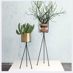 hay plantenstandaard - Google zoeken