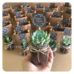 Pin by Lynn Liu on Wedding favors in your guests a gift and a wedding momento that they'll have forever! Succulent Party Favors, Succulent Gifts, Wedding Favors For Guests, Wedding Gifts, Floral Arrangements, Wedding Flowers, Bridal Shower, Succulents, Wedding Planning