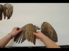 This is some amazing reference for how a wing opens and closes, and the structure of the feathers as it does so.